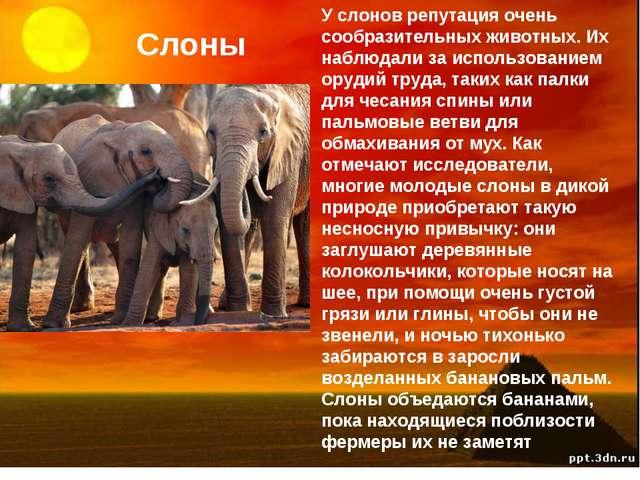 Слоны У слонов репутация очень сообразительных животных. Их наблюдали за испо...