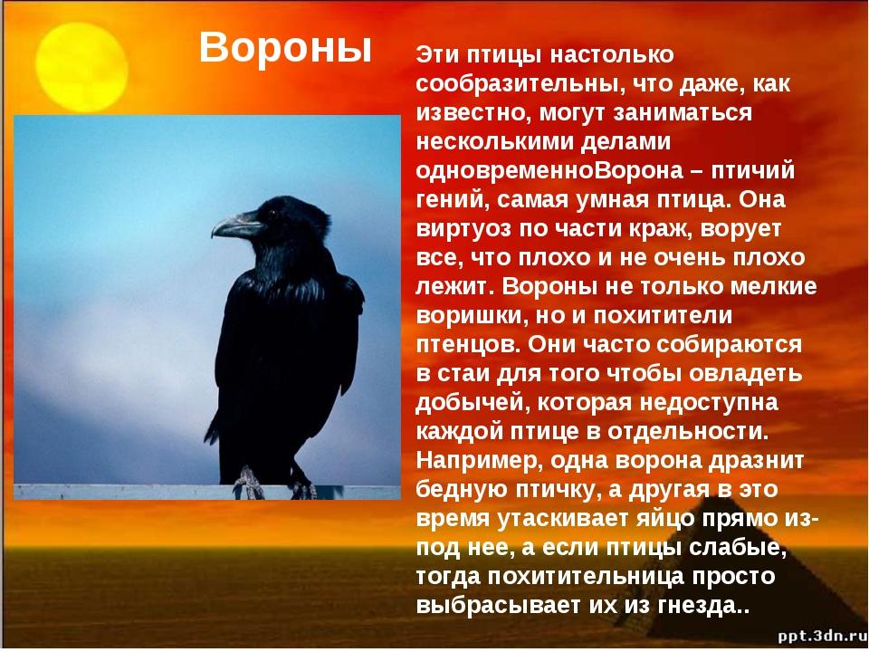 Вороны Эти птицы настолько сообразительны, что даже, как известно, могут зани...