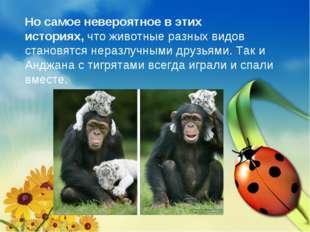 Но самое невероятное в этих историях,что животные разных видов становятся не