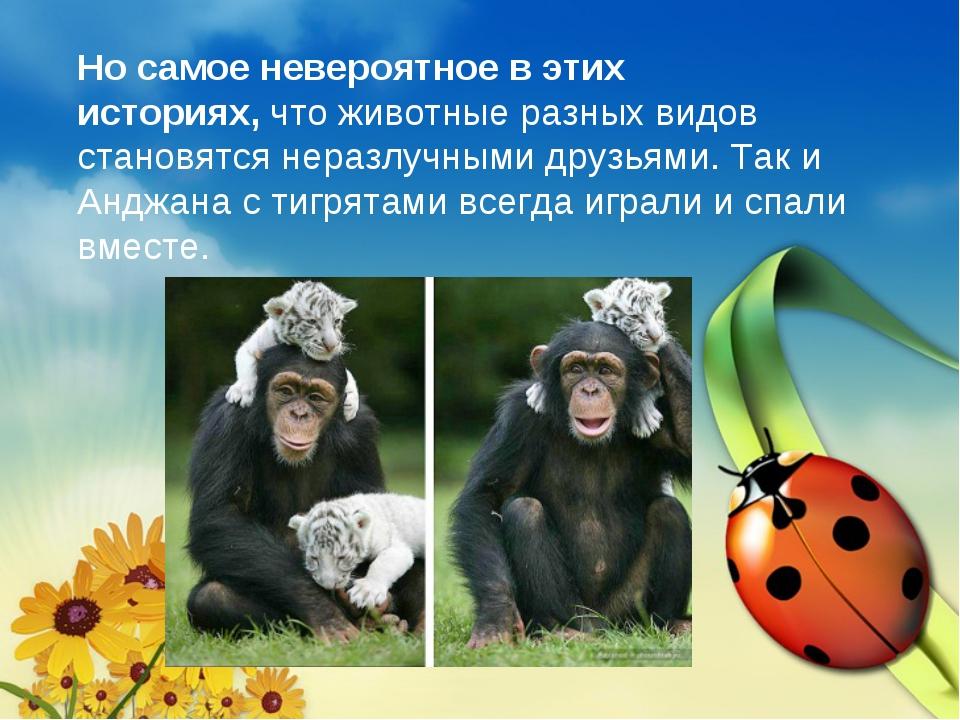 Но самое невероятное в этих историях,что животные разных видов становятся не...