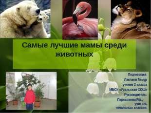 Самые лучшие мамы среди животных Подготовил: Лакпаев Тимур ученик 2 класса МБ