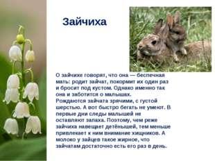 Зайчиха О зайчихе говорят, что она— беспечная мать: родит зайчат, покормит и