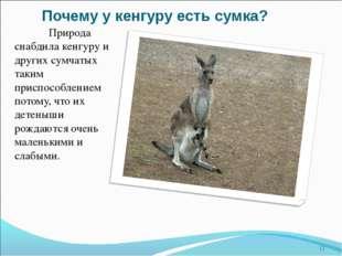 Почему у кенгуру есть сумка? Природа снабдила кенгуру и других сумчатых таки