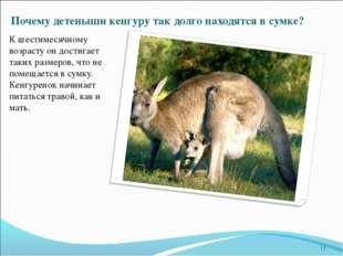 Почему детеныши кенгуру так долго находятся в сумке? К шестимесячному возраст