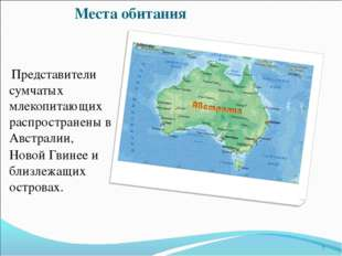 Места обитания Представители сумчатых млекопитающих распространены в Австрали