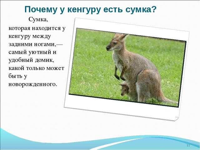 Почему у кенгуру есть сумка? Сумка, которая находится у кенгуру между задним...