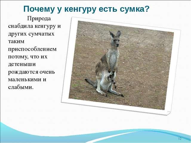 Почему у кенгуру есть сумка? Природа снабдила кенгуру и других сумчатых таки...