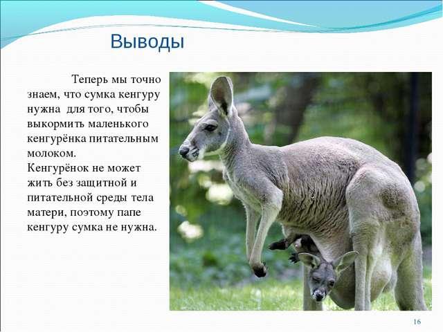 Выводы Теперь мы точно знаем, что сумка кенгуру нужна для того, чтобы выкорм...