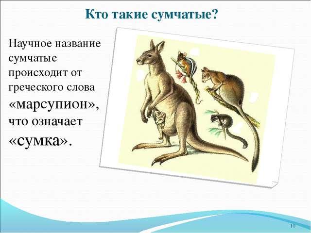 Кто такие сумчатые? Научное название сумчатые происходит от греческого слова...
