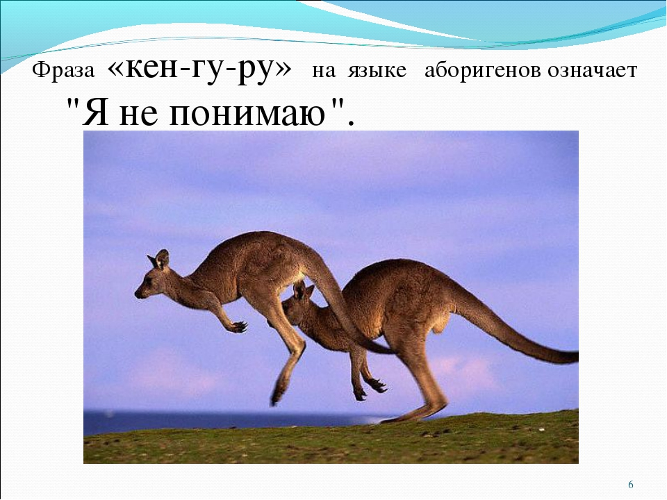 "Фраза «кен-гу-ру» на языке аборигенов означает ""Я не понимаю"".  *"