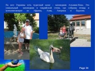 На юге Украины есть чудесный оазис - заповедник Аскания-Нова. Это уникальный