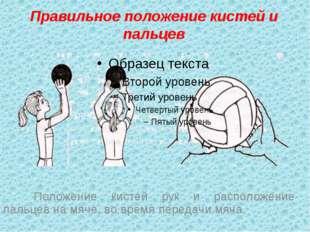 Правильное положение кистей и пальцев Положение кистей рук и расположение п
