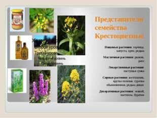 Представители семейства Крестоцветные Пищевые растения: горчица, капуста, хре