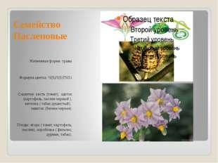Семейство Пасленовые Жизненная форма: травы Формула цветка: Ч(5)Л(5)Т5П1 Соцв