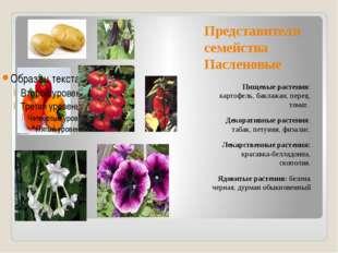 Представители семейства Пасленовые Пищевые растения: картофель, баклажан, пер