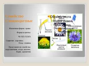 Семейство Сложноцветные Жизненная форма: травы Формула цветка: Ч0 Л(5) Т(5)П1