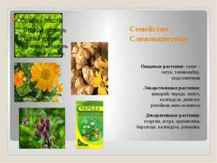 Семейство Сложноцветные Пищевые растения: салат – латук, топинамбур, подсолне
