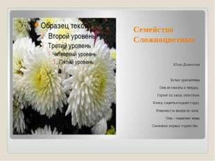 Семейство Сложноцветные Юлия Демянская Белые хризантемы Они игольчаты и твёрд