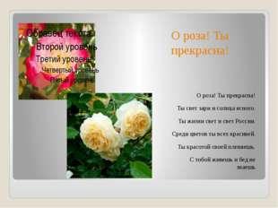 О роза! Ты прекрасна! О роза! Ты прекрасна! Ты свет зари и солнца ясного. Ты