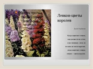 Левкои-цветы королев Булат Окуджава Когда зацветают левкои, еще расцвести не