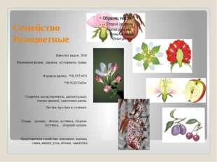 Семейство Розоцветные Известно видов: 3000 Жизненная форма: деревья, кустарни