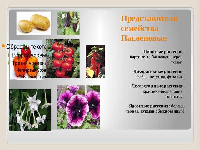Представители семейства Пасленовые Пищевые растения: картофель, баклажан, пер...