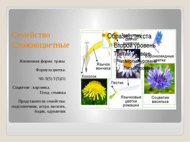 Семейство Сложноцветные Жизненная форма: травы Формула цветка: Ч0 Л(5) Т(5)П1...