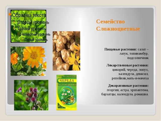 Семейство Сложноцветные Пищевые растения: салат – латук, топинамбур, подсолне...
