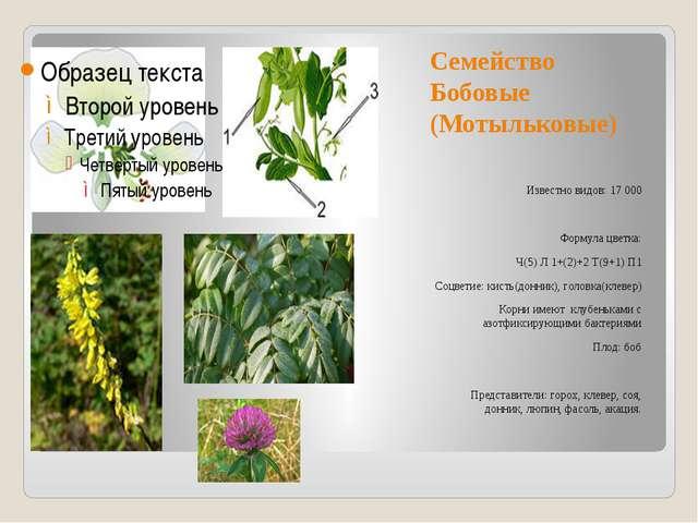 Семейство Бобовые (Мотыльковые) Известно видов: 17 000 Формула цветка: Ч(5) Л...