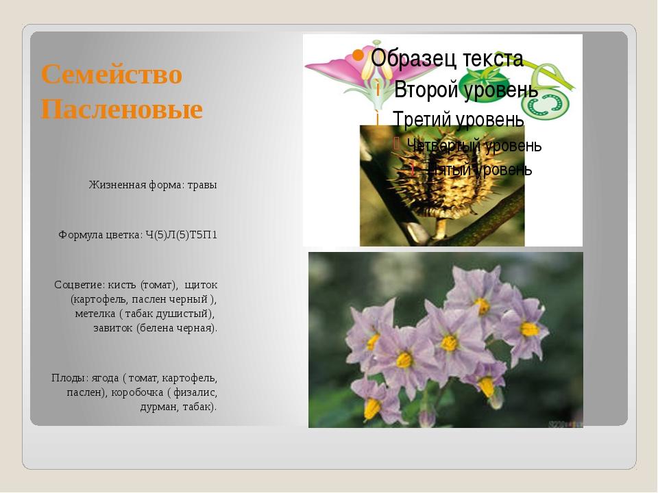Семейство Пасленовые Жизненная форма: травы Формула цветка: Ч(5)Л(5)Т5П1 Соцв...