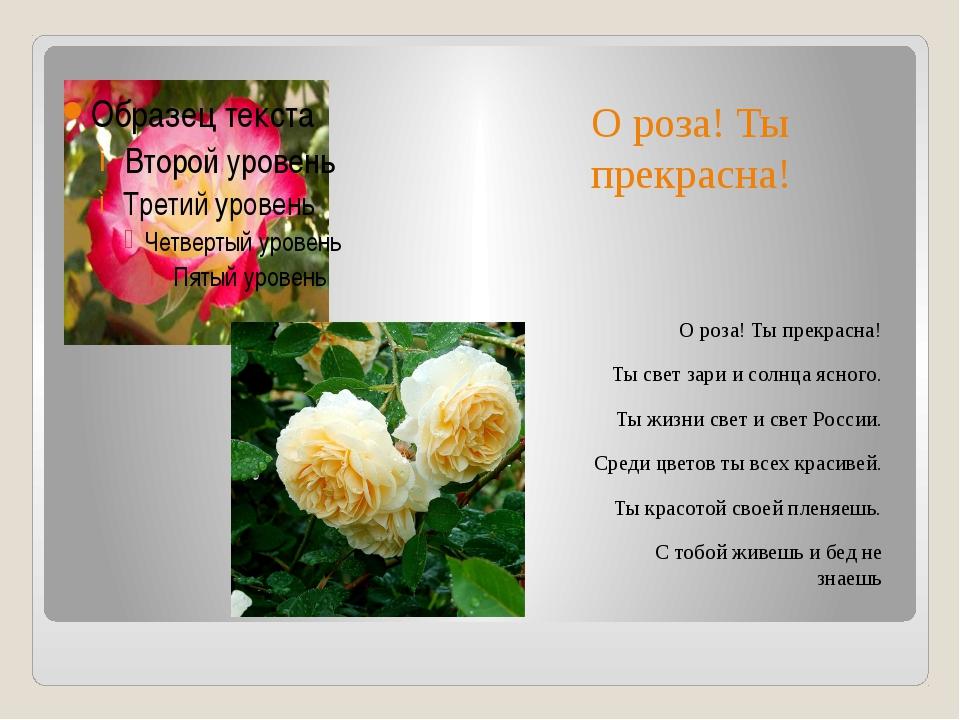 О роза! Ты прекрасна! О роза! Ты прекрасна! Ты свет зари и солнца ясного. Ты...