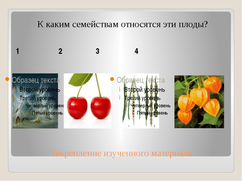 Закрепление изученного материала К каким семействам относятся эти плоды? 1 2...