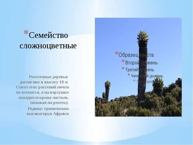 Семейство сложноцветные Розеточные деревья достигают в высоту 10 м Ствол этих...