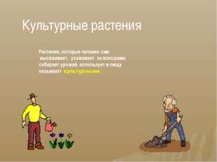 Культурные растения Растения, которые человек сам высаживает, ухаживает за вс
