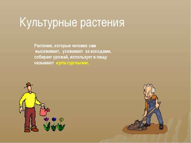 Культурные растения Растения, которые человек сам высаживает, ухаживает за вс...