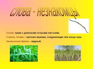 Осока- трава с длинными острыми листьями. Стрела, тетива – прочная веревка, с