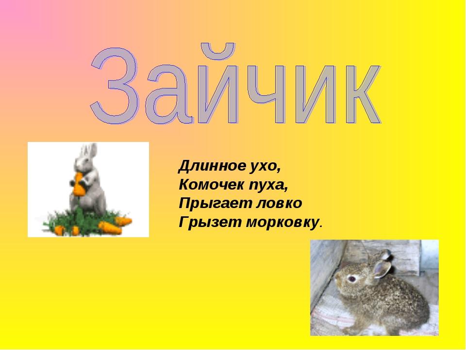 Длинное ухо, Комочек пуха, Прыгает ловко Грызет морковку.