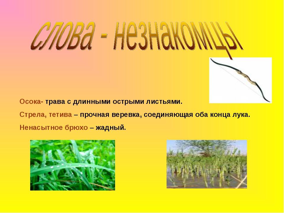 Осока- трава с длинными острыми листьями. Стрела, тетива – прочная веревка, с...
