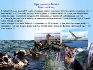 Природа озера Байкал Животный мир В Байкале обитает около 2600 видов и подвид