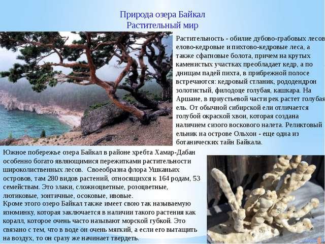 Природа озера Байкал Растительный мир Кроме этого озеро Байкал также имеет св...