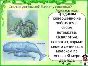 Как ты считаешь? Назови этих животных в порядке уменьшения их размеров: а) сл