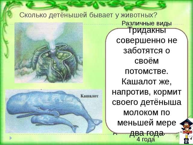 Как ты считаешь? Назови этих животных в порядке уменьшения их размеров: а) сл...