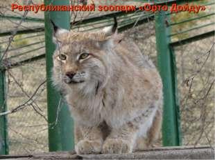 Республиканский зоопарк «Орто Дойду»