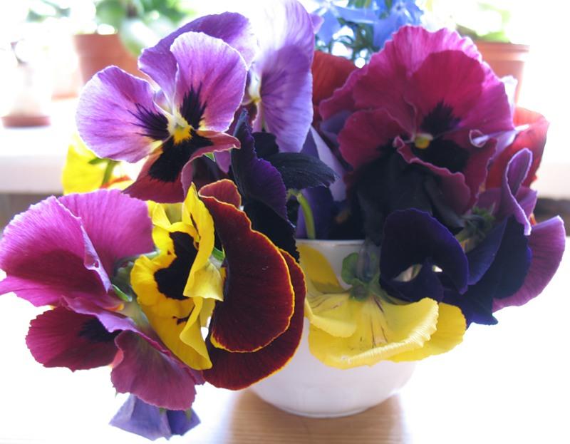 C:\Users\V@N4eG\Desktop\цветы\2.jpg