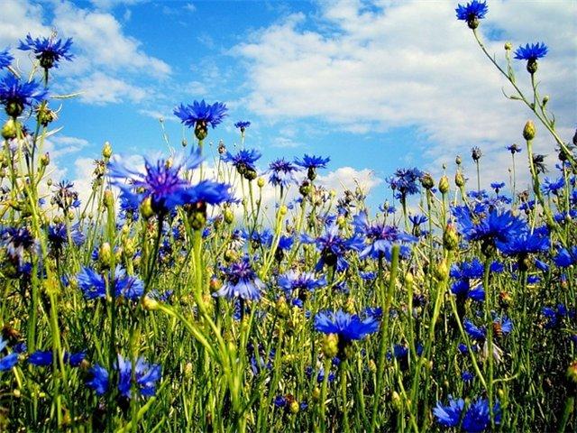 C:\Users\V@N4eG\Desktop\цветы\1.jpg