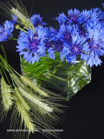 C:\Users\V@N4eG\Desktop\цветы\3.jpg