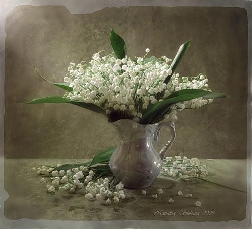 C:\Users\V@N4eG\Desktop\цветы\4.jpg
