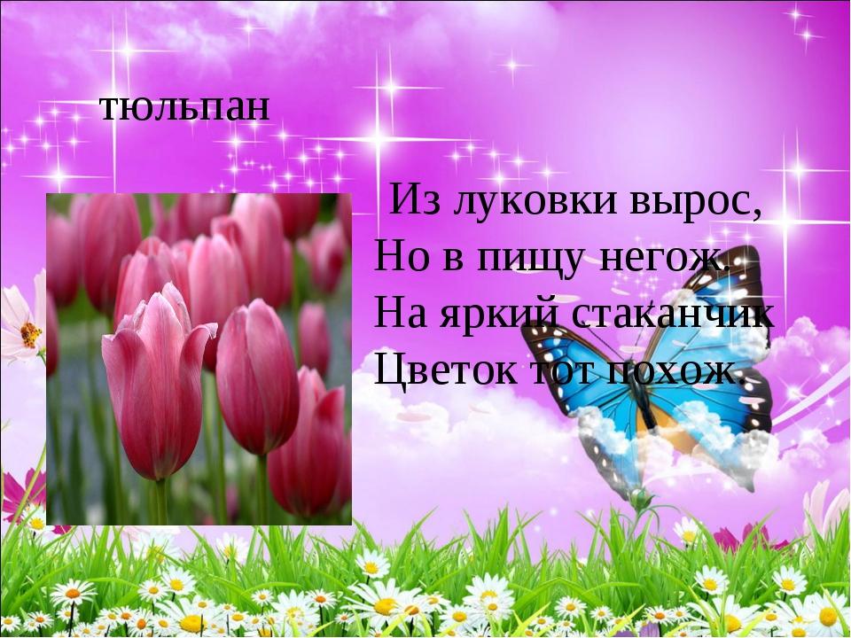 тюльпан Из луковки вырос, Но в пищу негож. На яркий стаканчик Цветок тот...