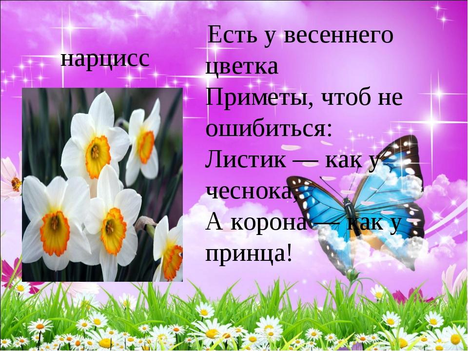 нарцисс Есть у весеннего цветка Приметы, чтоб не ошибиться: Листик — как у...