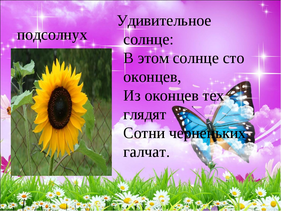 подсолнух Удивительное солнце: В этом солнце сто оконцев, Из оконцев тех гл...